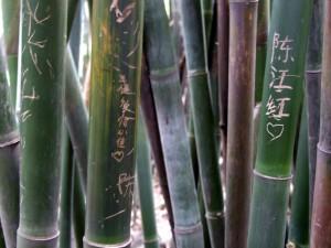 elingpark-bambusherz